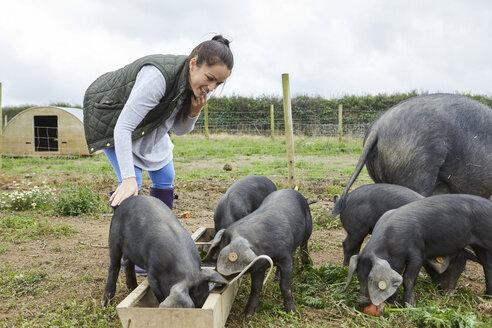 Woman on farm feeding pig and piglets - CUF22734