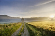 Germany, Bavaria, Swabia, Tussenhausen, field path and morning fog at sunrise, Augsburg Western Woods Nature Parkield path - SIEF07789