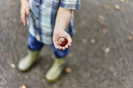 Cropped view of boy's hands holding conker - CUF23221
