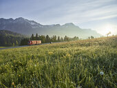 Austria, Tyrol, truck on country road in the morning light - CVF00733