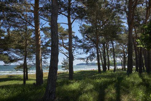 Germany, Mecklenburg-Western Pomerania, Ruegen, Baltic seaside resort Binz - ELF01865