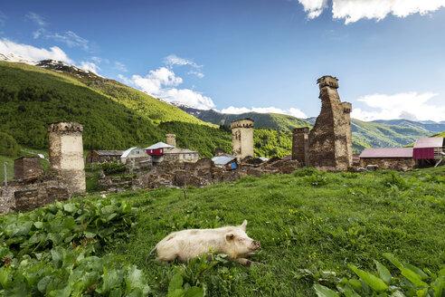 Georgia, Svaneti, Samegrelo-Zemo Svaneti, Ushguli, pig lying in meadow - FPF00173