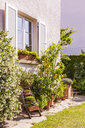 Germany, Stuttgart, potted plants in front of house - WDF04683