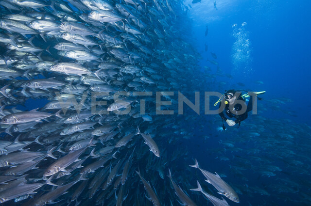 Scuba diver swimming past wall of Jacks, Cocos Island, Costa Rica - CUF29855 - Rodrigo Friscione/Westend61