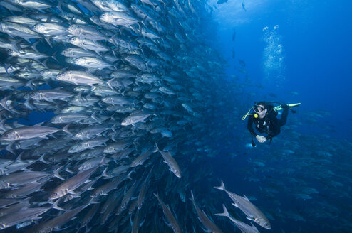 Scuba diver swimming past wall of Jacks, Cocos Island, Costa Rica - CUF29855