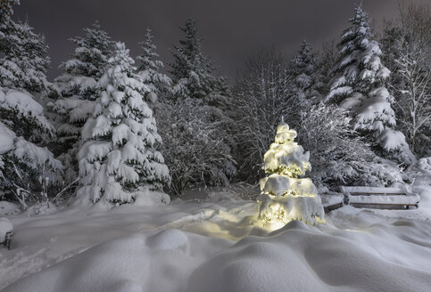 Illuminated snow covered Christmas tree in forest in botanical gardens, Reykjavik, Iceland - CUF30491
