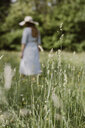 Italy, Veneto, Young woman plucking flowers and herbs in field - ALBF00415