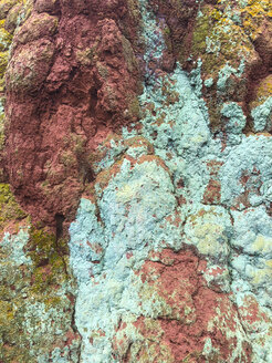 Colorful lichen on tree bark, close-up - REAF00283