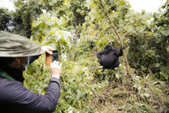 Africa, Democratic Republic of Congo, Person taking pictures of mountain gorillas in jungle - REAF00287