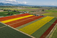 Aerial view of colorful tulip fields and distant mountains - ISF09694