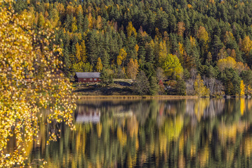 Pine trees and cabin reflecting in lake, Kolbotn, Norway - CUF31344