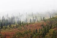 USA, Alaska, autumn in Denali National Park - CVF00828
