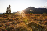 USA, Alaska, autumn in Denali National Park - CVF00837