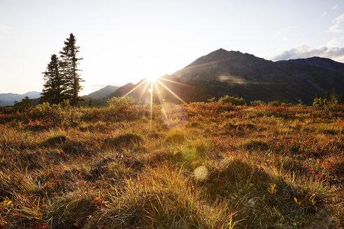 USA, Alaska, autumn in Denali National Park - CVF00837