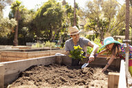 Mid adult man and daughter digging flower bed in community garden - ISF10298
