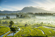Rice fields, Bali, Indonesia - CUF32719
