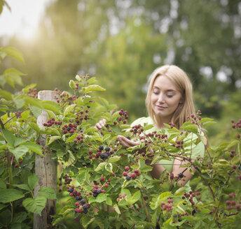 Working picking blackberries on fruit farm - CUF32809