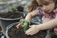 Little girl planting tomato plant - KMKF00377