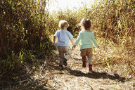 Boy and girl holding hands in field with crops - ISF10573