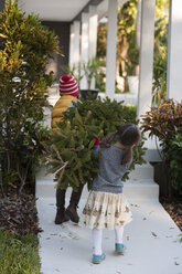 Girl and boy carrying christmas tree - ISF12906