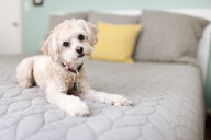 Portrait of dog lying on bed - ISF12924