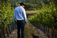 Mid adult man and dog monitoring wine and champagne vines, Cottonworth, Hampshire, UK - CUF33274