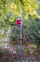Little girl climbing on jungle gym in autumn - JFEF00883