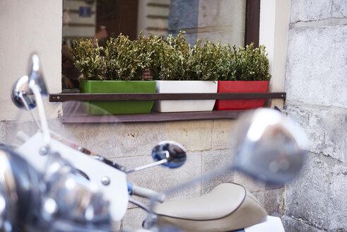 Three flower box on window sill of a house - ABIF00642