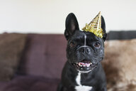 Portrait of cute dog on sofa wearing party hat - ISF14348