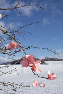 Origami flowers on twigs in winter - PSTF00132