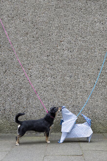 Blue origami dog and dog sniffing - PSTF00156