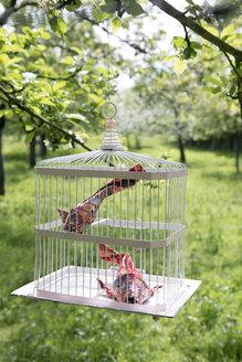 Origami cois in cage - PSTF00162