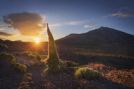 Spain, Canary Islands, Tenerife, Teide National Park at sunset - DHCF00188