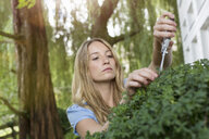 Young woman pruning bush in garden - CUF37741