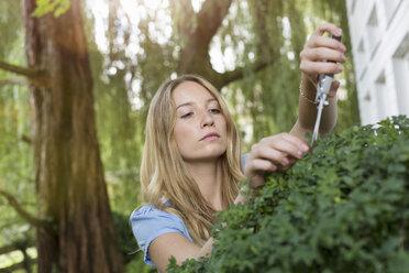 Young woman pruning bush in garden - CUF37741