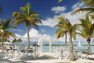 Palm trees and chairs at beach resort, Providenciales, Turks and Caicos Islands, Caribbean - ISF15083