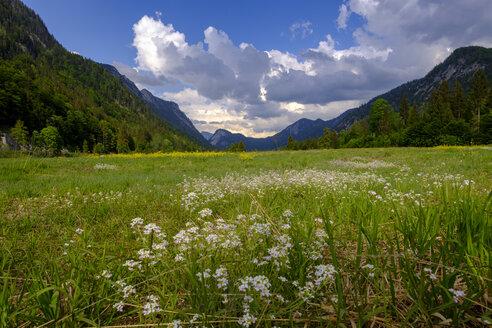 Germany, Bavaria, Upper Bavaria, Reit im Winkl, Lake Weitsee near Ruhpolding, moor, moor grass - LBF01994