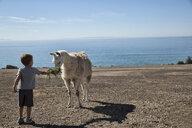Boy feeding hay to llama, County Park, Los Angeles, California, USA - ISF15745