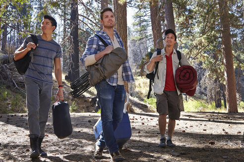 Three young men in forest with camping equipment, Los Angeles, California, USA - ISF15871
