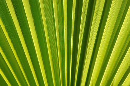 Close-up of palm leave - JTF01025