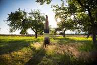 Young girl doing handstand on meadow at summer evening - LVF07218