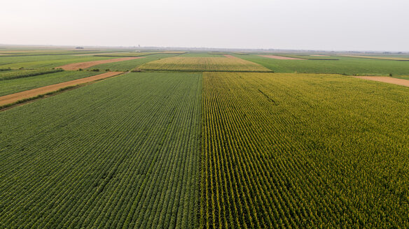Serbia, Vojvodina, Aerial view of corn, wheat and soybean fields in the late summer afternoon - NOF00054