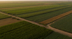 Serbia, Vojvodina, Aerial view of corn, wheat and soybean fields in the late summer afternoon - NOF00057