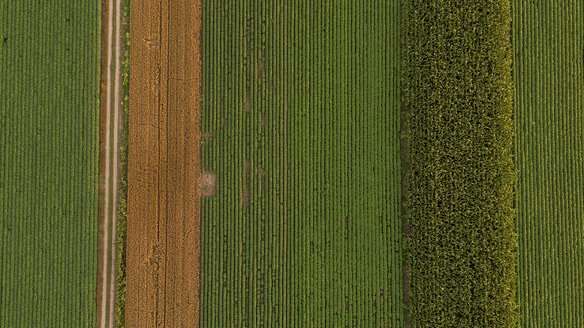 Serbia, Vojvodina, Aerial view of corn, wheat and soybean fields in the late summer afternoon - NOF00060