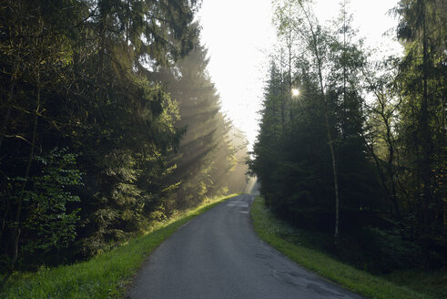 Empty country road through forest at twilight on misty day - RUEF01905