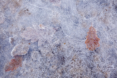 Leaves frozen in layer of ice - CUF40239