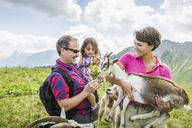 Parents and daughter feeding goats, Tyrol, Austria - CUF40413
