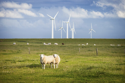 Sheep in field with windfarm, Schleswig Holstein, Germany - CUF40926