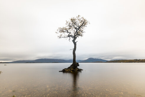 UK, Scotland, the lone tree in Loch Lomond lake - WPEF00694