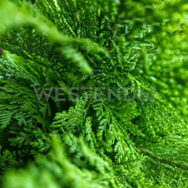 Plant, Details, Green, Berlin, Germany - NGF00450 - Nadine Ginzel/Westend61